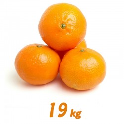 Mandarina 19 kg